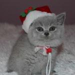 img_4904-roxi-18-grudnia-2016-7-tygodni