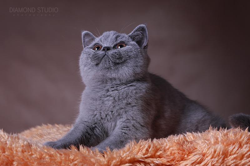 O kociakach