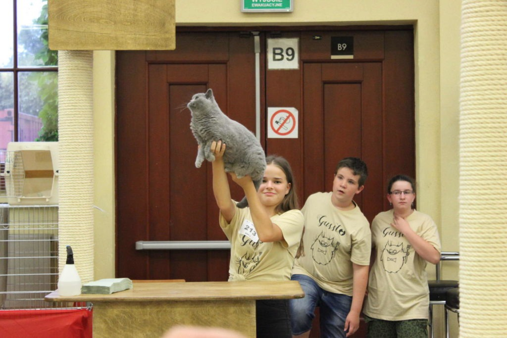 Międzynarodowa wystawa kotów rasowych we Wrocławiu