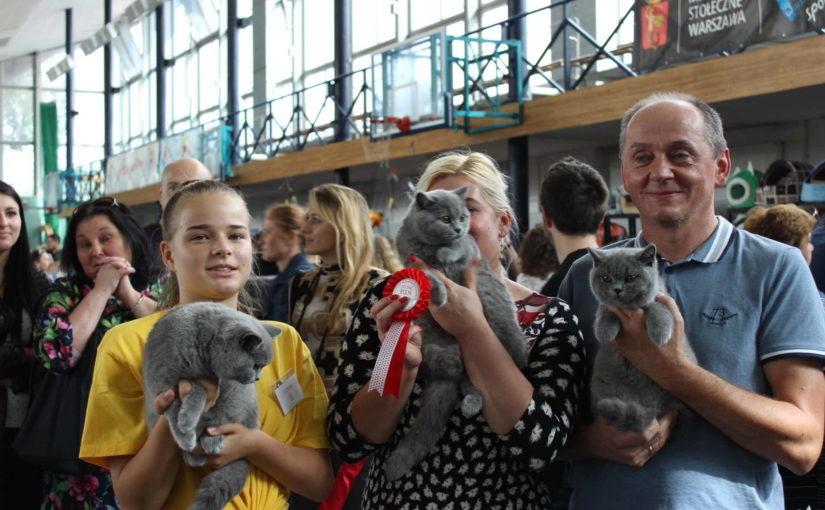 Kolejny sukces Miotu Cinkers na Międzynarodowej wystawie kotów rasowych w Warszawie