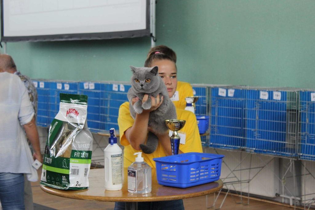 Sukces na Międzynarodowej wystawie kotów rasowych w Warszawie